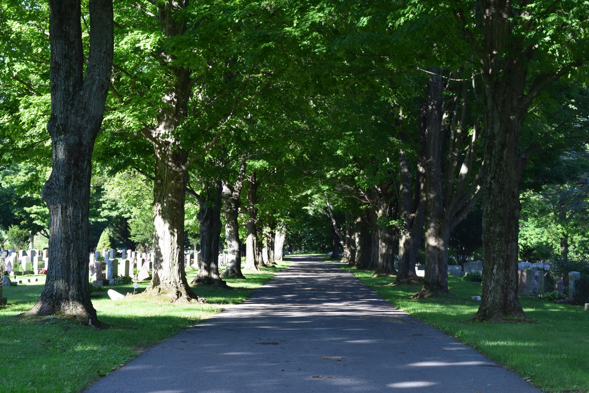 Tree lined pathway at Mount Olivet Cemetery